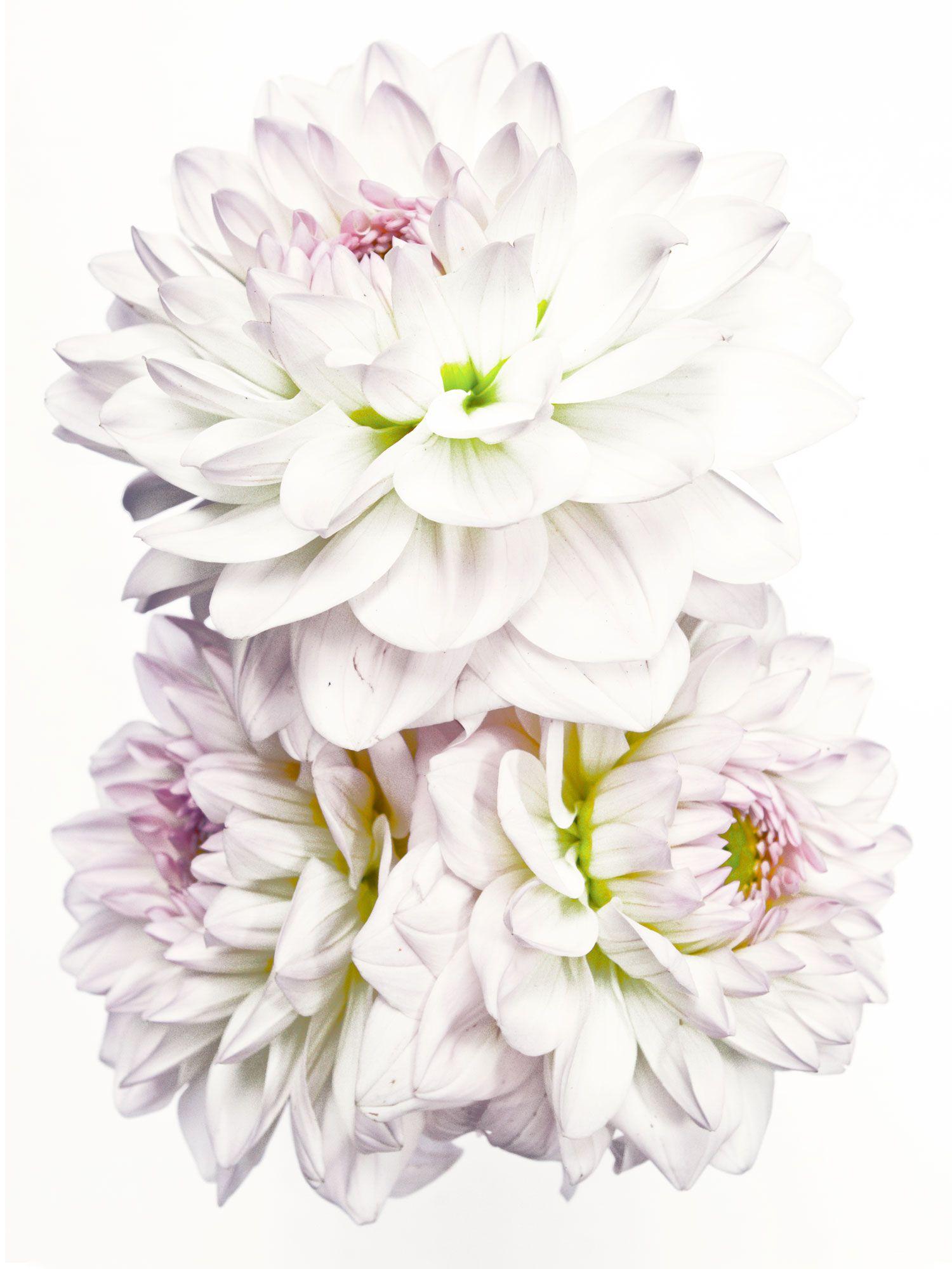 DITTMAR_anni-hall_flowers